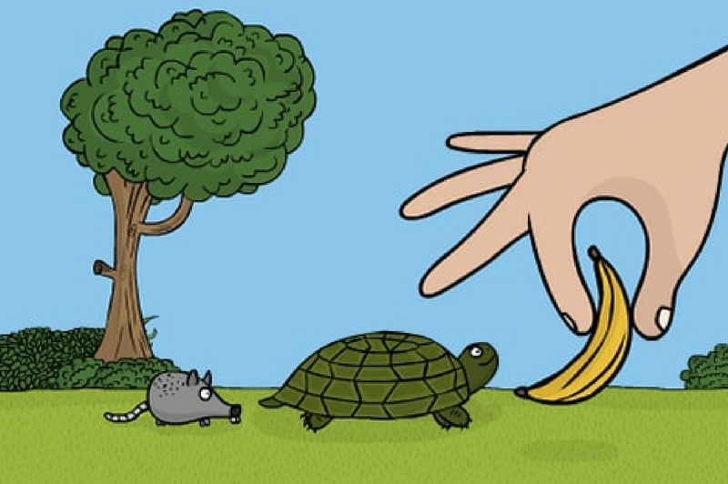 Challenge builder hand giving banana to turtle